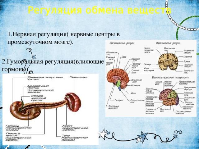 Регуляция обмена веществ 1.Нервная регуляция( нервные центры в промежуточном мозге). 2.Гуморальная регуляция(влияющие гормоны)