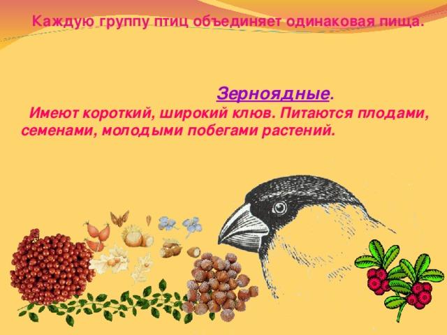 Каждую группу птиц объединяет одинаковая пища.     Зерноядные .  Имеют короткий, широкий клюв. Питаются плодами, семенами, молодыми побегами растений.
