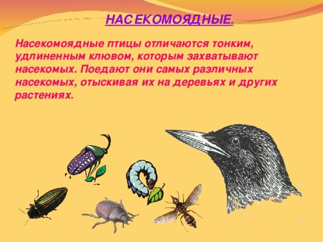 НАСЕКОМОЯДНЫЕ .  Насекомоядные птицы отличаются тонким, удлиненным клювом, которым захватывают насекомых. Поедают они самых различных насекомых, отыскивая их на деревьях и других растениях.