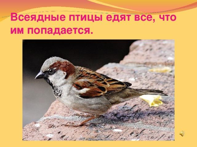 Всеядные птицы едят все, что им попадается.