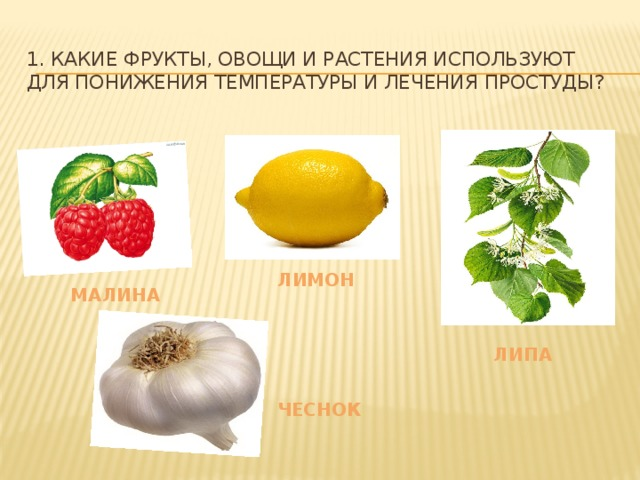 1. Какие фрукты, овощи и растения используют для понижения температуры и лечения простуды? лимон малина липа чеснок