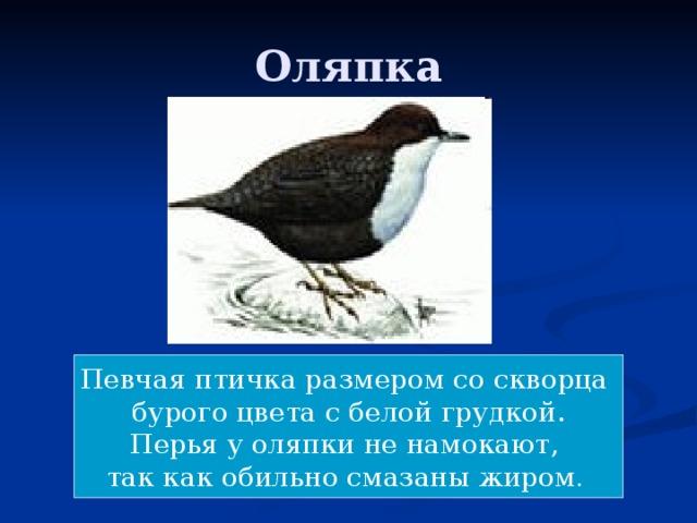 Оляпка Певчая птичка размером со скворца бурого цвета с белой грудкой. Перья у оляпки не намокают, так как обильно смазаны жиром .