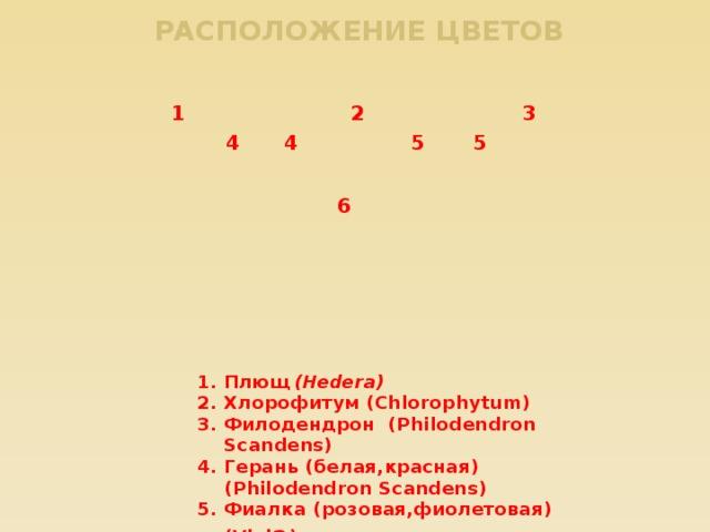 Расположение цветов 1 2 3 4 4 5 5 6 Плющ (Hedera) Хлорофитум (Chlorophytum) Филодендрон (Philodendron Scandens) Герань (белая,красная) (Philodendron Scandens) Фиалка (розовая,фиолетовая) (Viol a ) Папоротник ( Filicopsida)