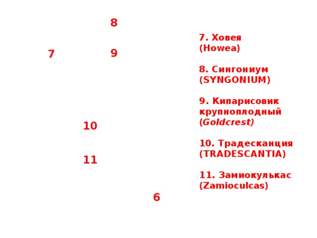 8 7. Ховея (Howea)  8. Сингониум (SYNGONIUM)  9. Кипарисовик крупноплодный ( Goldcrest)  10. Традесканция (TRADESCANTIA)  11. Замиокулькас (Zamioculcas)  9 7 10 11 6