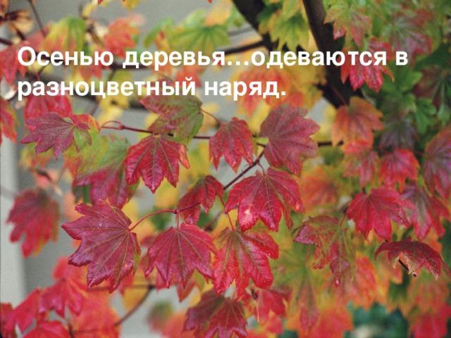 Осенью деревья…одеваются в разноцветный наряд.