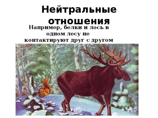 Нейтральные отношения Например, белки и лось в одном лесу не контактируют друг с другом