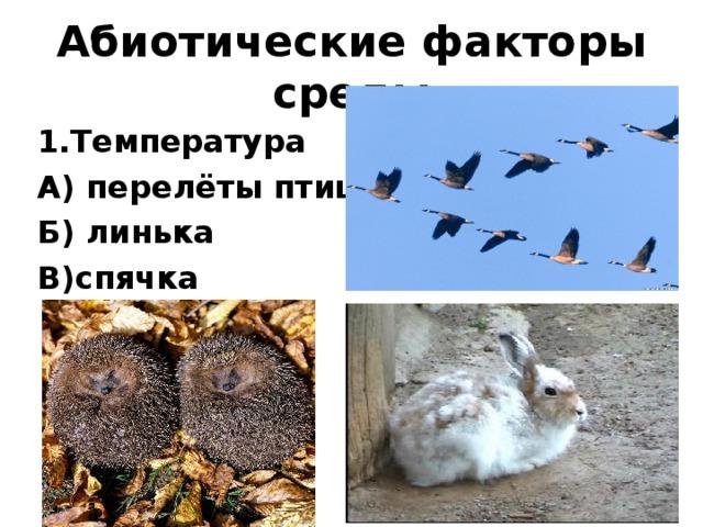 Абиотические факторы среды 1.Температура А) перелёты птиц Б) линька В)спячка