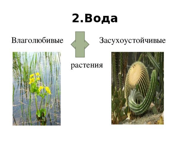 2.Вода Влаголюбивые Засухоустойчивые  растения