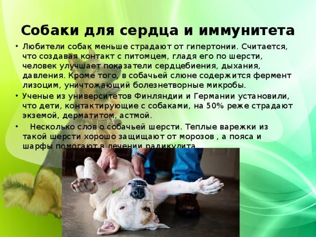 Собаки для сердца и иммунитета