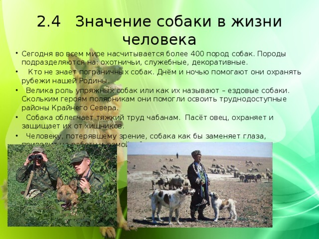 2.4 Значение собаки в жизни человека