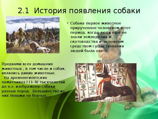 2.1 История появления собаки   Собака первое животное прирученное человеком в тот период, когда люди еще не знали земледелия и скотоводства и основным средством существования людей была охота. Предками всех домашних животных , в том числе и собак, являлись дикие животные.  На древнеегипетских памятниках І І І- ІV тысячелетий до н.э. изображены собаки разных пород. Большинство из них похожи на борзых.