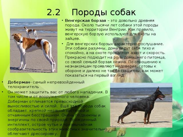 2.2 Породы собак