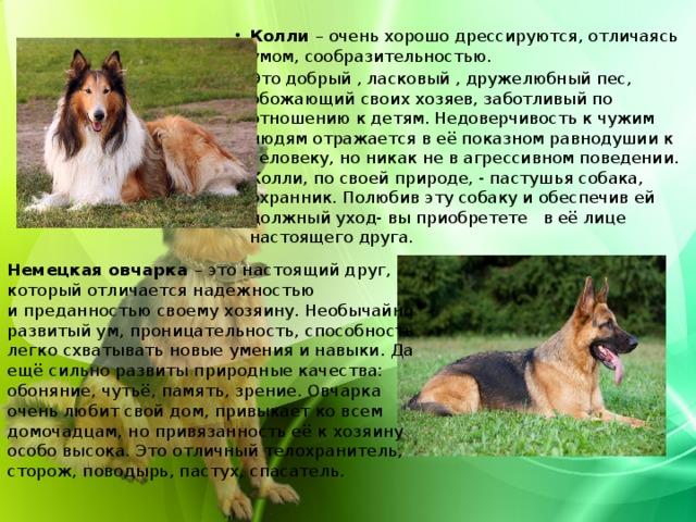 Колли – очень хорошо дрессируются, отличаясь умом, сообразительностью. Это добрый , ласковый , дружелюбный пес, обожающий своих хозяев, заботливый по отношению к детям. Недоверчивость к чужим людям отражается в её показном равнодушии к человеку, но никак не в агрессивном поведении. Колли, по своей природе, - пастушья собака, охранник. Полюбив эту собаку и обеспечив ей должный уход- вы приобретете в её лице настоящего друга.