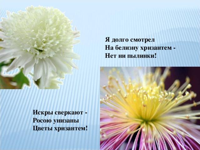 Я долго смотрел  На белизну хризантем -  Нет ни пылинки!   Искры сверкают -  Росою унизаны  Цветы хризантем!