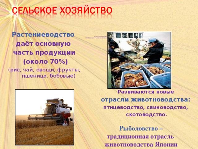 В СЕЛЬСКОМ ХОЗЯЙСТВЕ  ЗАНЯТО ОКОЛО 3% ЭКОНОМИЧЕСКИ АКТИВНОГО НАСЕЛЕНИЯ. Растениеводство даёт основную часть продукции  (около 70%) (рис, чай, овощи, фрукты, пшеница. бобовые) Развиваются новые отрасли животноводства: птицеводство, свиноводство,  скотоводство.  Рыболовство – традиционная отрасль животноводства Японии