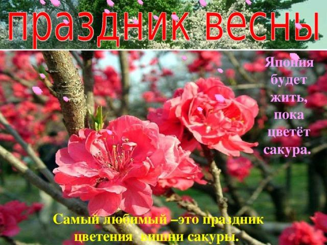 Япония будет жить, пока цветёт сакура. Самый любимый –это праздник цветения вишни сакуры.