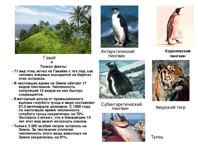 Королевский пингвин Антарктический пингвин Гавайи Только факты: - 71 вид птиц исчез на Гавайях с тех пор, как человек впервые высадился на берегах этих островов. - В настоящее време на Земле обитает 17 видов пингвинов. Численность популяций 12 видов из них быстро сокращается. - Ежегодный доход от промышленного вылова голубого тунца в мире составляет $7,2 миллиардов долларов. С 1980 года по настоящее время численность голубого тунца сократилась на 70%. Эксперты считают, что в ближайшие 10 лет этот вид может исчезнуть совсем. - Только 3 200 особей тигров осталось на Земле. За последнее столетие численность этого вида животных на Земле сократилась на 97%. Субантарктический пингвин Амурский тигр Тунец