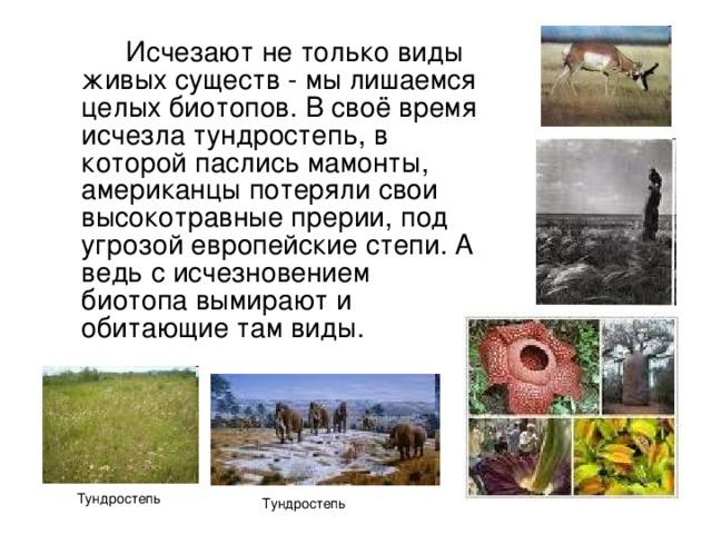 Исчезают не только виды живых существ - мы лишаемся целых биотопов. В своё время исчезла тундростепь, в которой паслись мамонты, американцы потеряли свои высокотравные прерии, под угрозой европейские степи. А ведь с исчезновением биотопа вымирают и обитающие там виды. Тундростепь Тундростепь