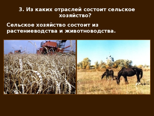 курсовая работа по теме разведение крупного рогатого скота