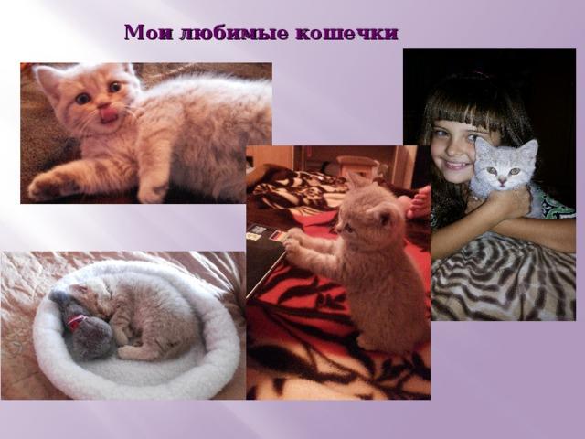 Мои любимые кошечки