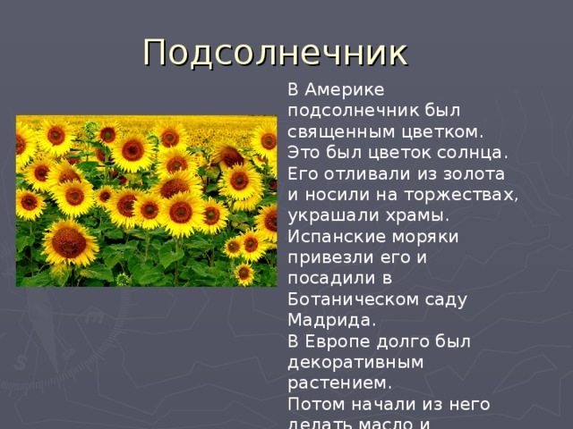 В Америке подсолнечник был священным цветком. Это был цветок солнца. Его отливали из золота и носили на торжествах, украшали храмы. Испанские моряки привезли его и посадили в Ботаническом саду Мадрида. В Европе долго был декоративным растением. Потом начали из него делать масло и получать семечки.