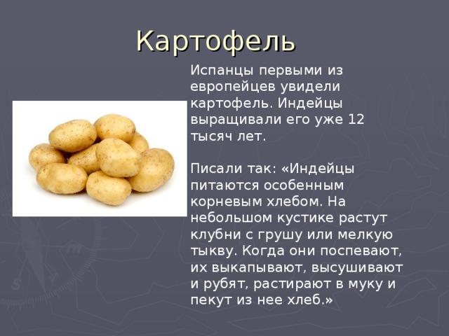 Испанцы первыми из европейцев увидели картофель. Индейцы выращивали его уже 12 тысяч лет. Писали так: «Индейцы питаются особенным корневым хлебом. На небольшом кустике растут клубни с грушу или мелкую тыкву. Когда они поспевают, их выкапывают, высушивают и рубят, растирают в муку и пекут из нее хлеб.»