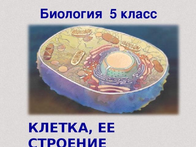 Биология 5 класс КЛЕТКА, ЕЕ СТРОЕНИЕ