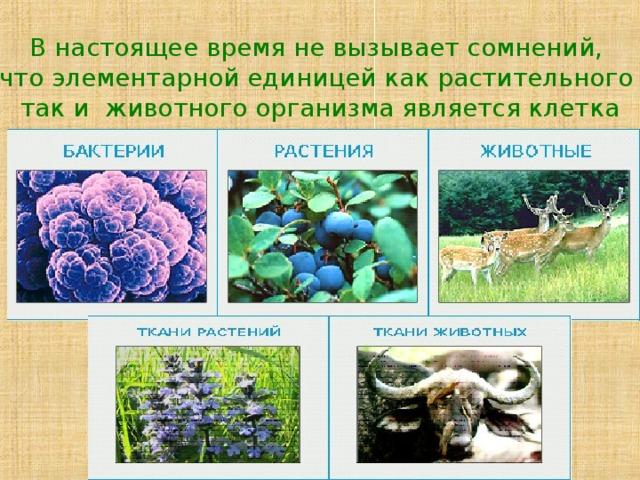 В настоящее время не вызывает сомнений, что элементарной единицей как растительного так и животного организма является клетка