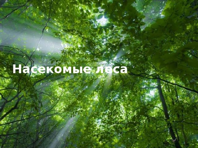 Насекомые леса  Free Powerpoint Templates