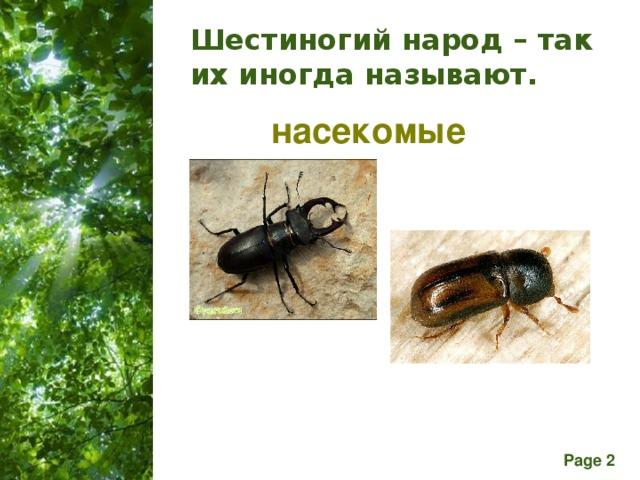 Шестиногий народ – так их иногда называют. насекомые