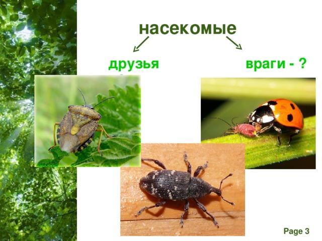 насекомые друзья - ? враги - ?