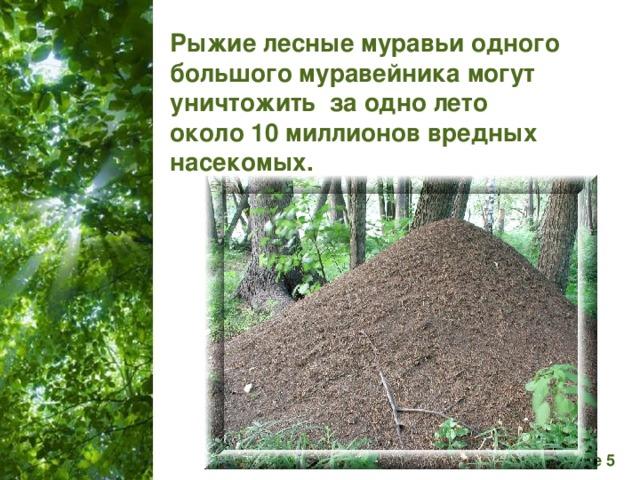 Рыжие лесные муравьи одного большого муравейника могут уничтожить за одно лето около 10 миллионов вредных насекомых.