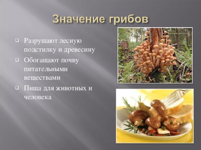 Разрушают лесную подстилку и древесину Обогащают почву питательными веществами Пища для животных и человека