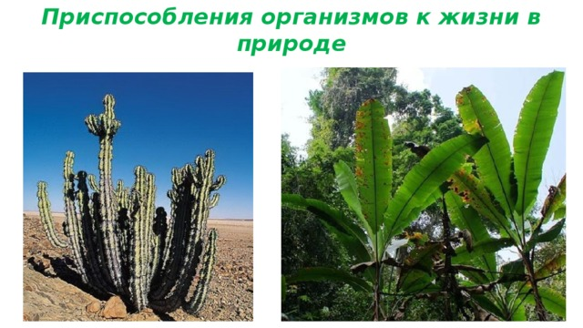 Приспособления организмов к жизни в природе
