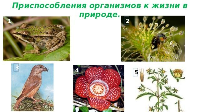 Приспособления организмов к жизни в природе. 2 1 3 4 5