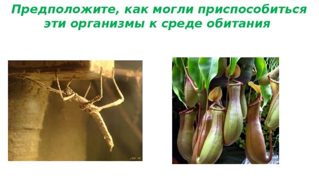 Предположите, как могли приспособиться эти организмы к среде обитания