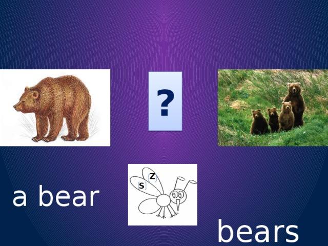 ?   S Z  bears  a bear