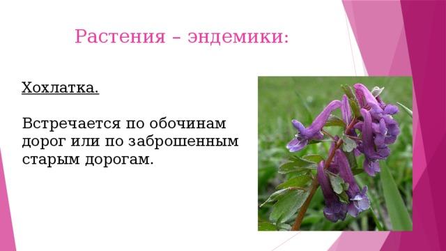 Растения – эндемики: Хохлатка. Встречается по обочинам дорог или по заброшенным старым дорогам.