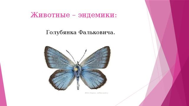 Животные – эндемики: Голубянка Фальковича.