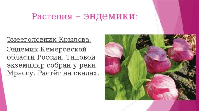 Растения – эндемики: Змееголовник Крылова. Эндемик Кемеровской области России. Типовой экземпляр собран у реки Мрассу. Растёт на скалах.