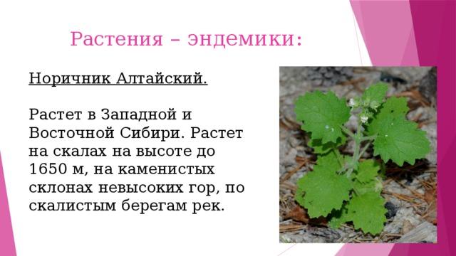 Растения – эндемики:   Норичник Алтайский. Растет в Западной и Восточной Сибири. Растет на скалах на высоте до 1650 м, на каменистых склонах невысоких гор, по скалистым берегам рек.