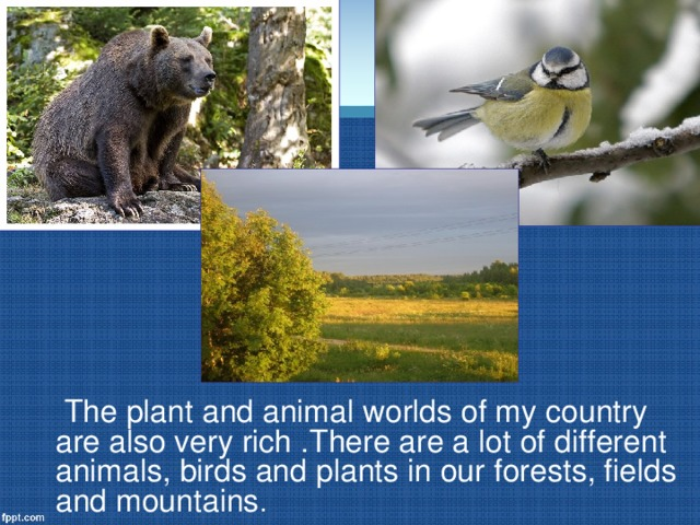 The plant and animal worlds of my country are also very rich .There are a lot of different animals, birds and plants in our forests, fields and mountains .