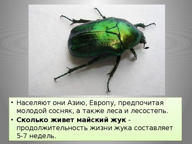 Населяют они Азию, Европу, предпочитая молодой сосняк, а также леса и лесостепь. Сколько живет майский жук - продолжительность жизни жука составляет 5-7 недель.