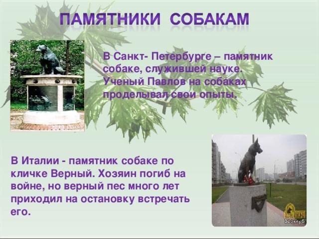 В Санкт- Петербурге – памятник собаке, служившей науке. Ученый Павлов на собаках проделывал свои опыты. В Италии - памятник собаке по кличке Верный. Хозяин погиб на войне, но верный пес много лет приходил на остановку встречать его.