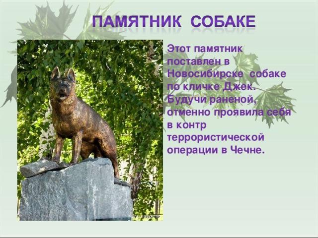 Этот памятник поставлен в Новосибирске собаке по кличке Джек. Будучи раненой, отменно проявила себя в контр террористической операции в Чечне.