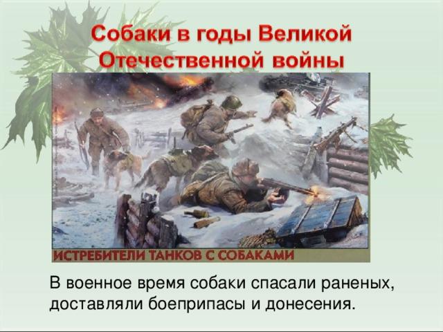 В военное время собаки спасали раненых, доставляли боеприпасы и донесения.