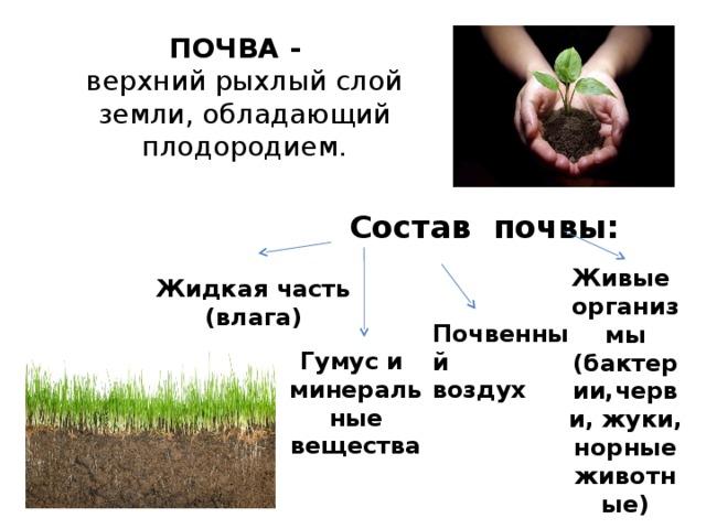 ПОЧВА -  верхний рыхлый слой земли, обладающий плодородием. Состав почвы: Живые организмы (бактерии,черви, жуки, норные животные)  Жидкая часть (влага) Почвенный воздух Гумус и минеральные вещества
