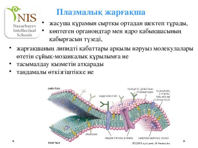 Плазмалық жарғақша