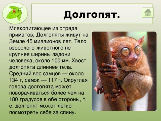 Долгопят. Млекопитающее из отряда приматов, Долгопяты живут на Земле 45 миллионов лет. Тело взрослого животного не крупнее ширины ладони человека, около 100 мм. Хвост долгопята длиннее тела. Средний вес самцов — около 134 г, самок — 117 г. Округлая голова долгопята может поворачиваться более чем на 180 градусов в обе стороны, т. е. долгопят может легко посмотреть себе за спину.
