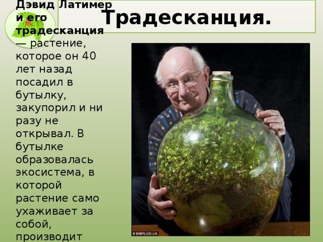 Дэвид Латимер  и его традесканция — растение, которое он 40 лет назад посадил в бутылку, закупорил и ни разу не открывал. В бутылке образовалась экосистема, в которой растение само ухаживает за собой, производит кислород и питается перегноем . Традесканция.